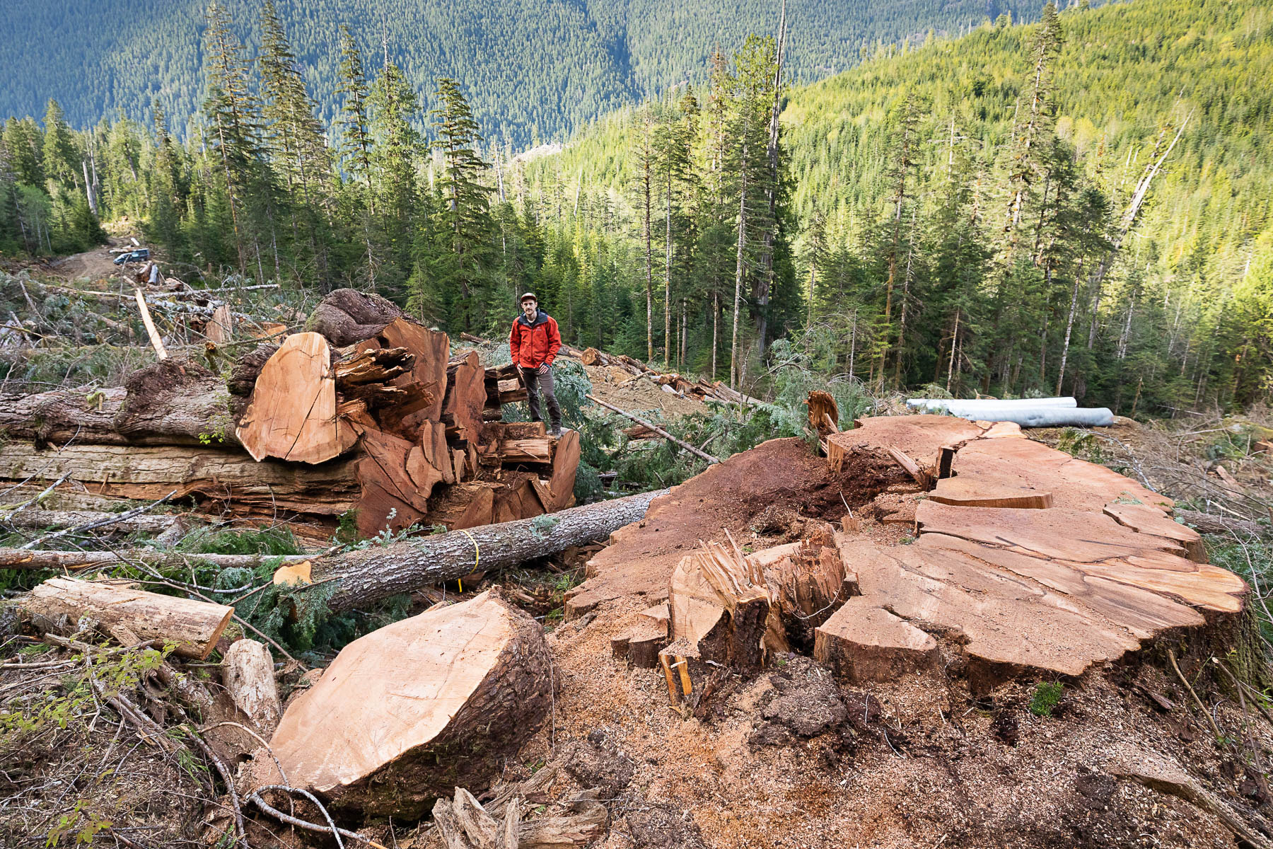 Nahmint-Valley-Old-Growth-Cedar-Stump-TJ-Watt.jpg