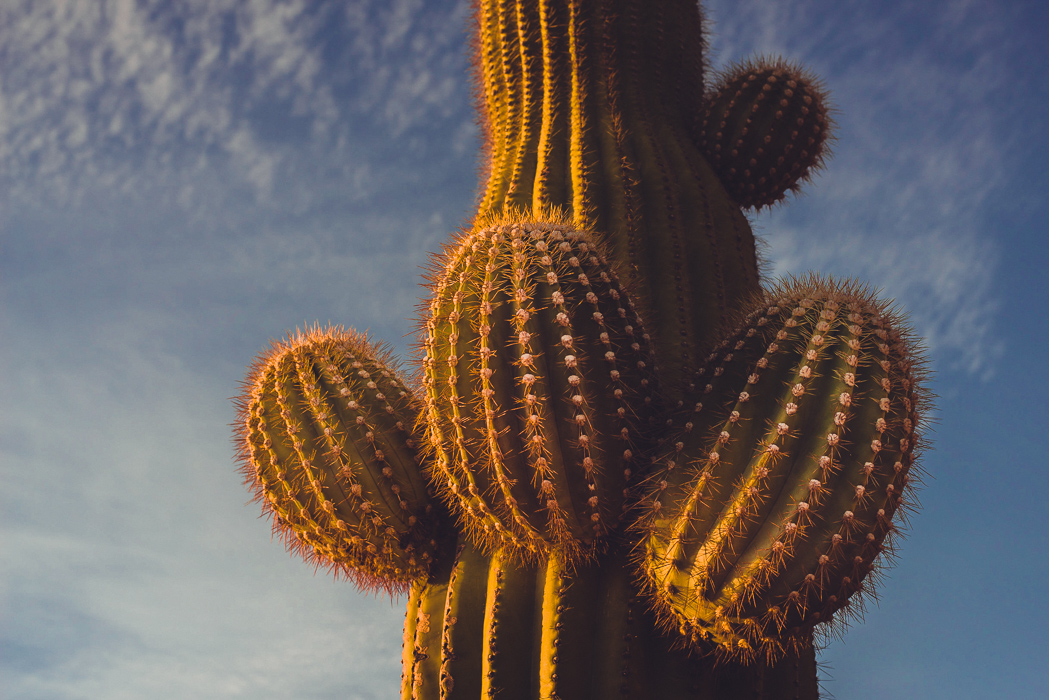 3Sixty Cactus