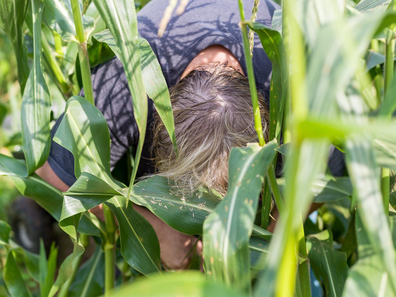 pam-picking-corn.jpg