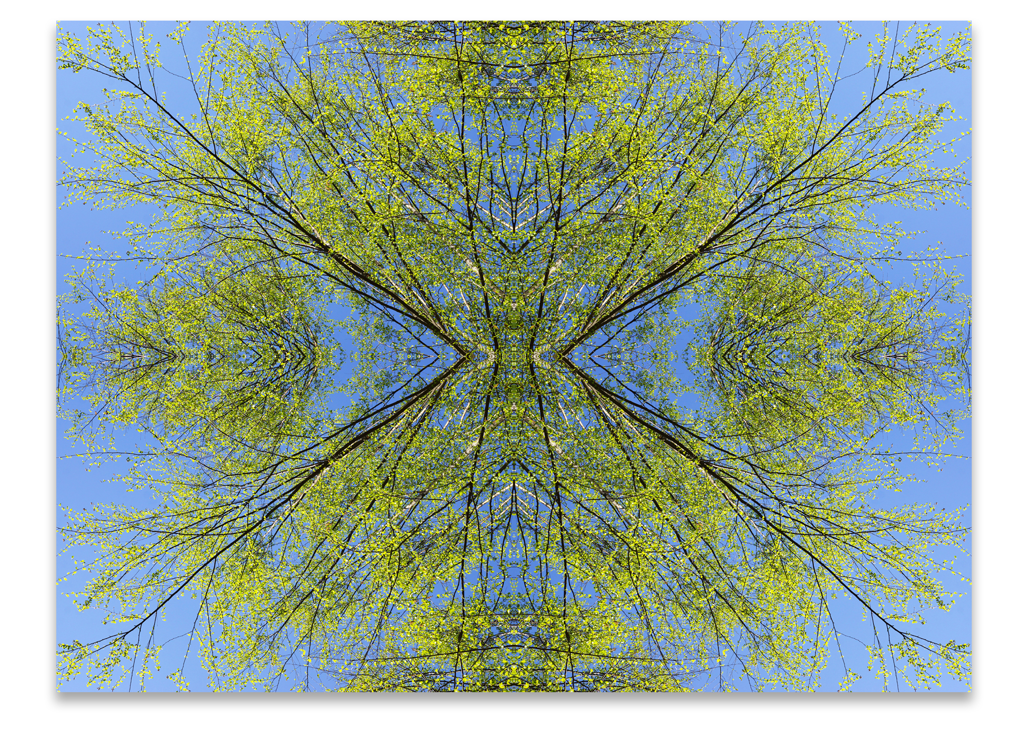 © TREES COMPOSITION No.82
