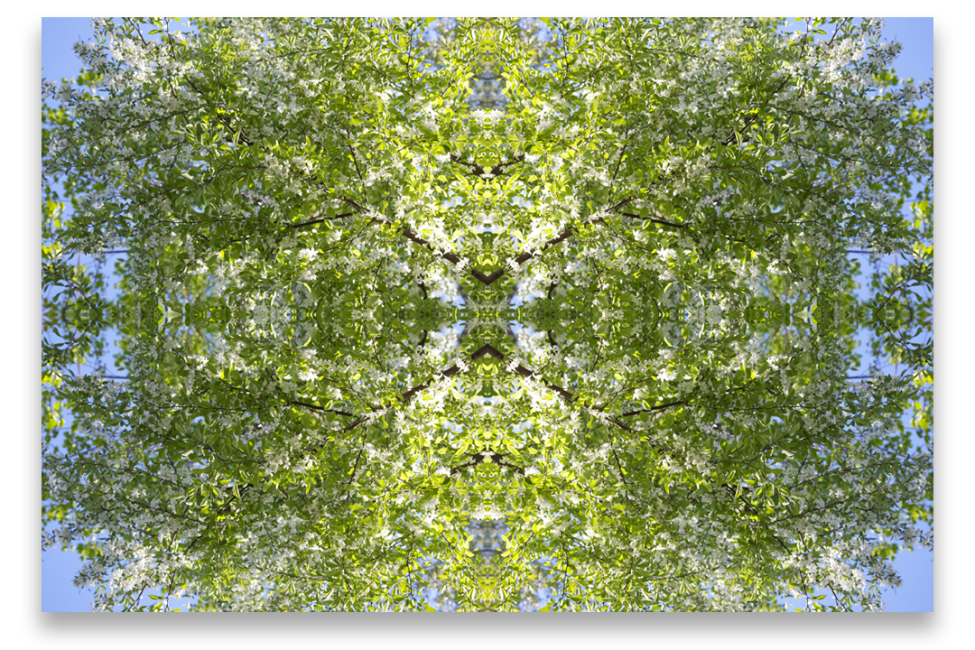 © TREE COMPOSITION No.606