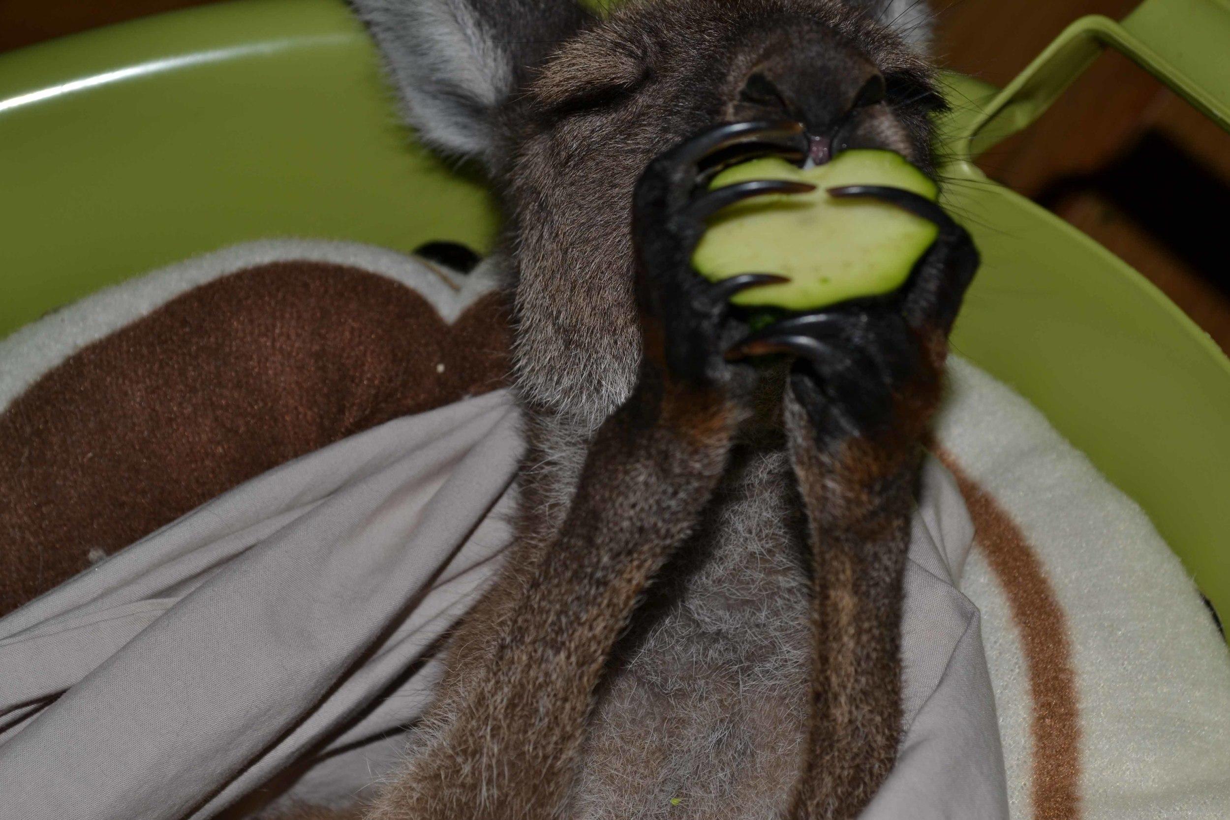 Sammie Jo loves Zucchini