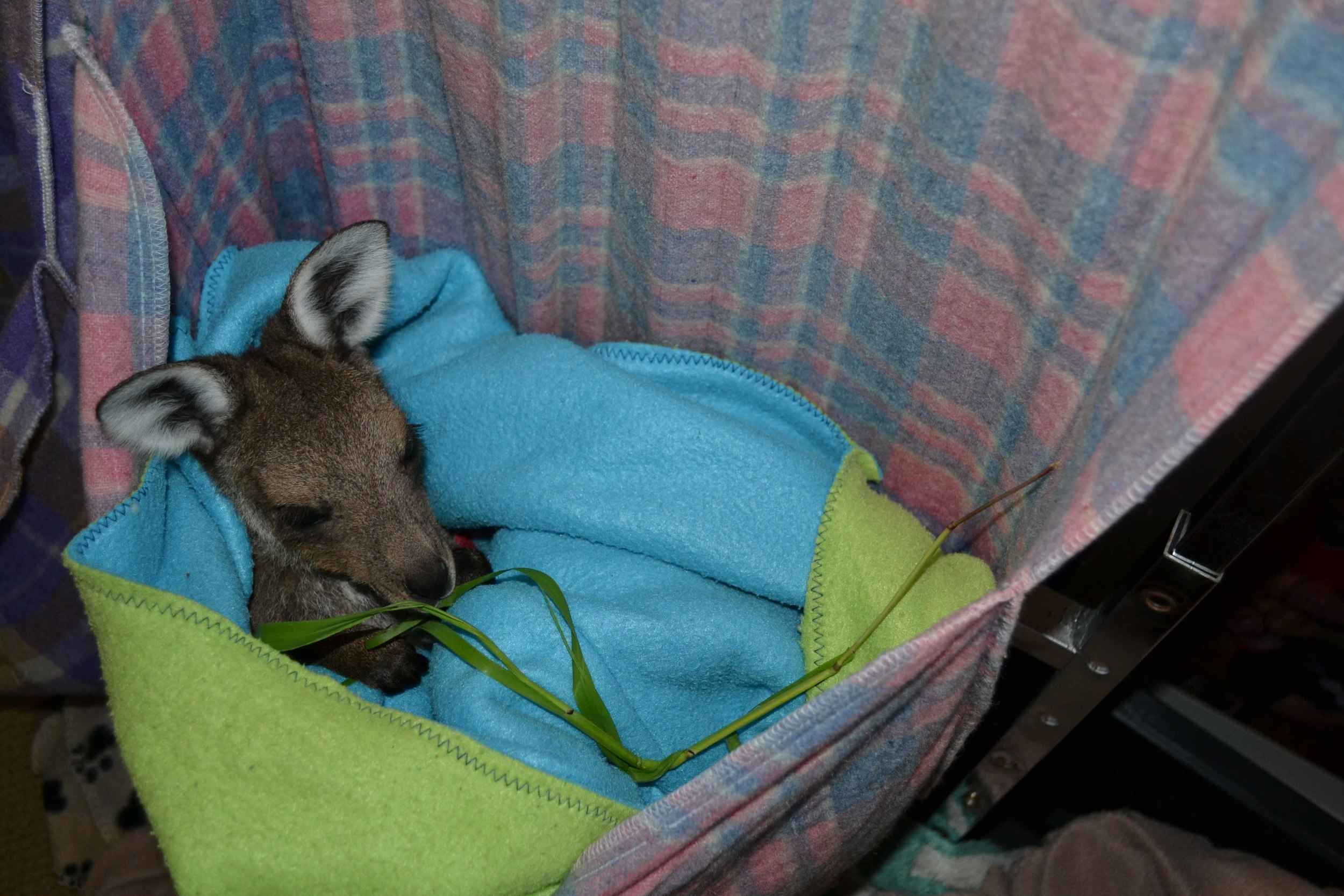 Shannon rescue joey at HideAway Haven