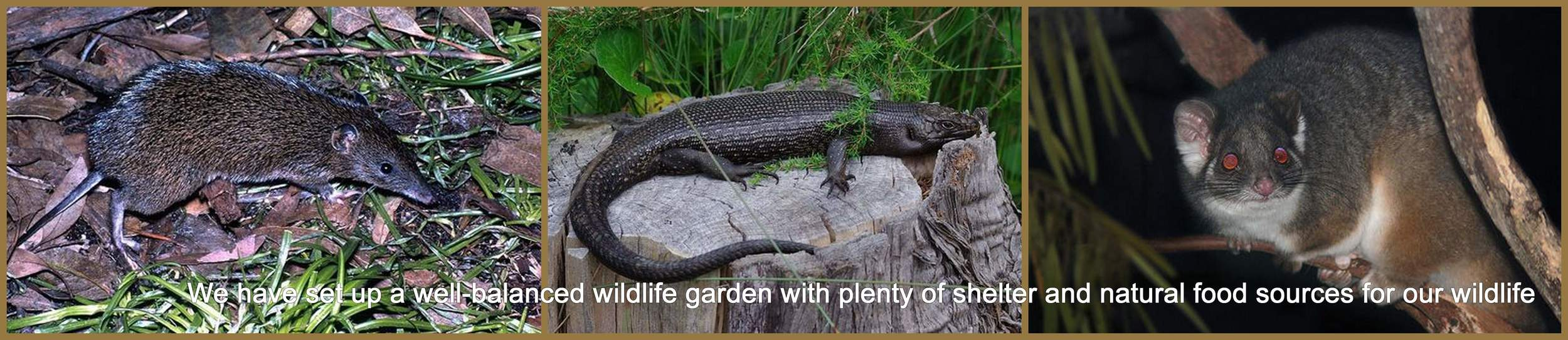 Wildlife Haven at HideAway Haven, albany Western australia