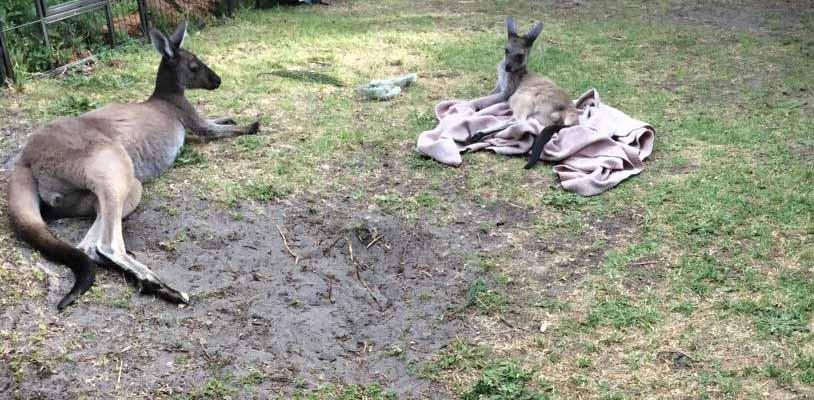 Sammie Jo and Josie relaxing in backyard