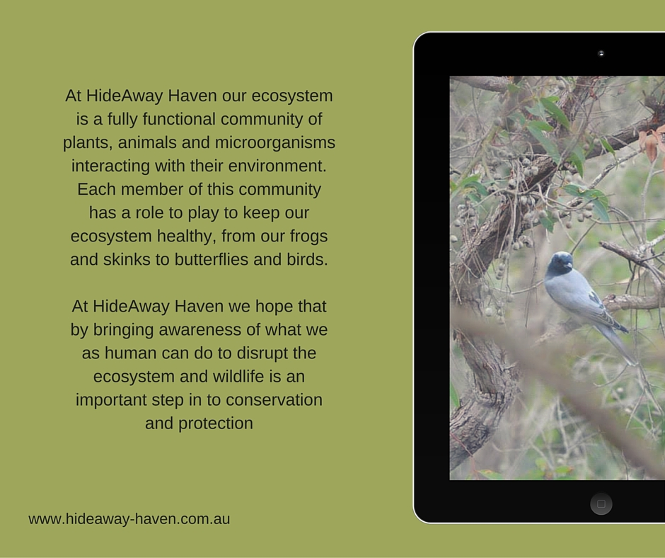 Ecosytems at HideAway Haven