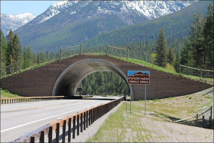 Montana. Credit: The Pedigree Artist