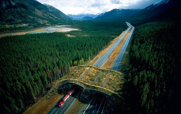 Banff National Park. Alberta, Canada. Credit: Joel Sartore