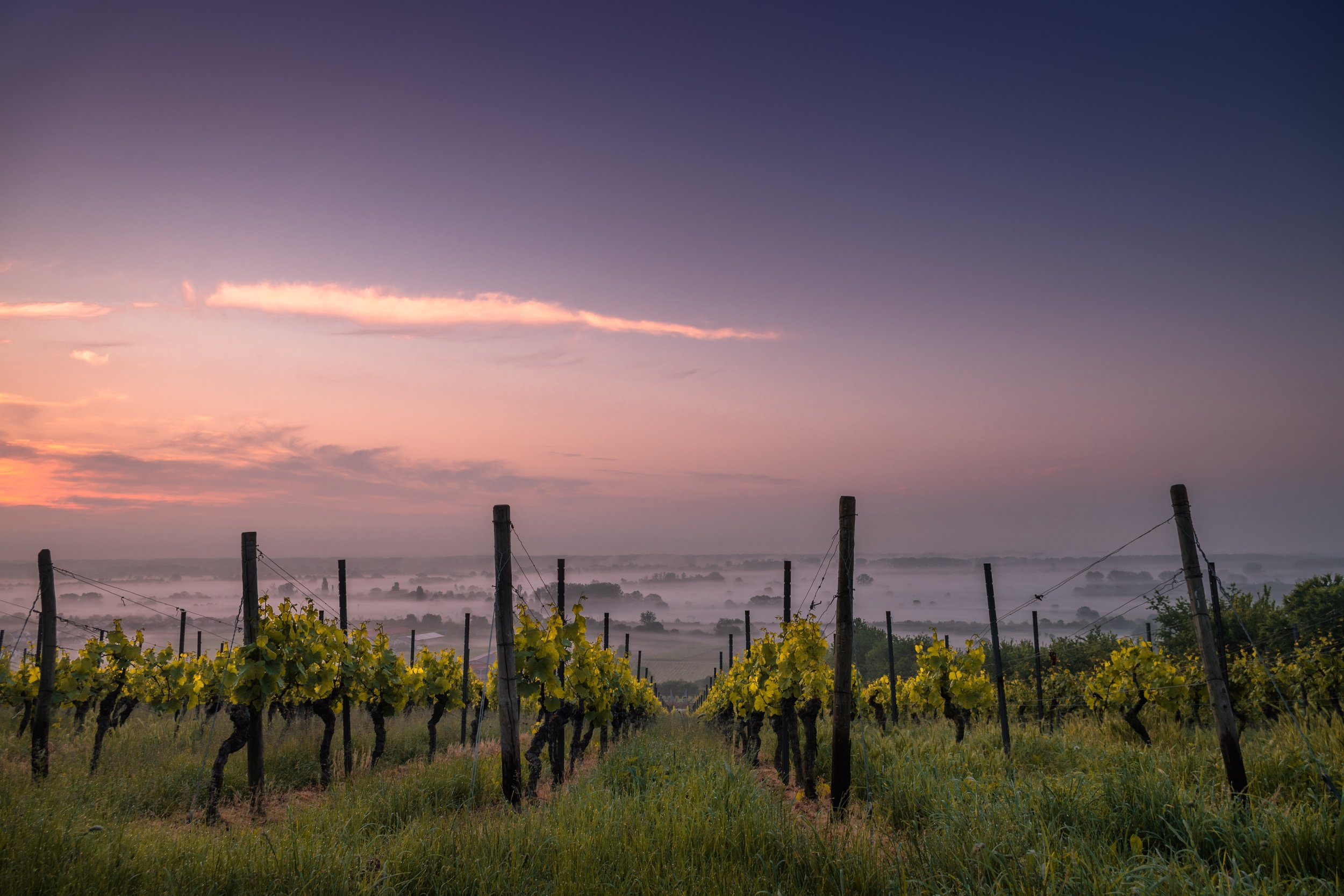 Wine Tourism in Albany