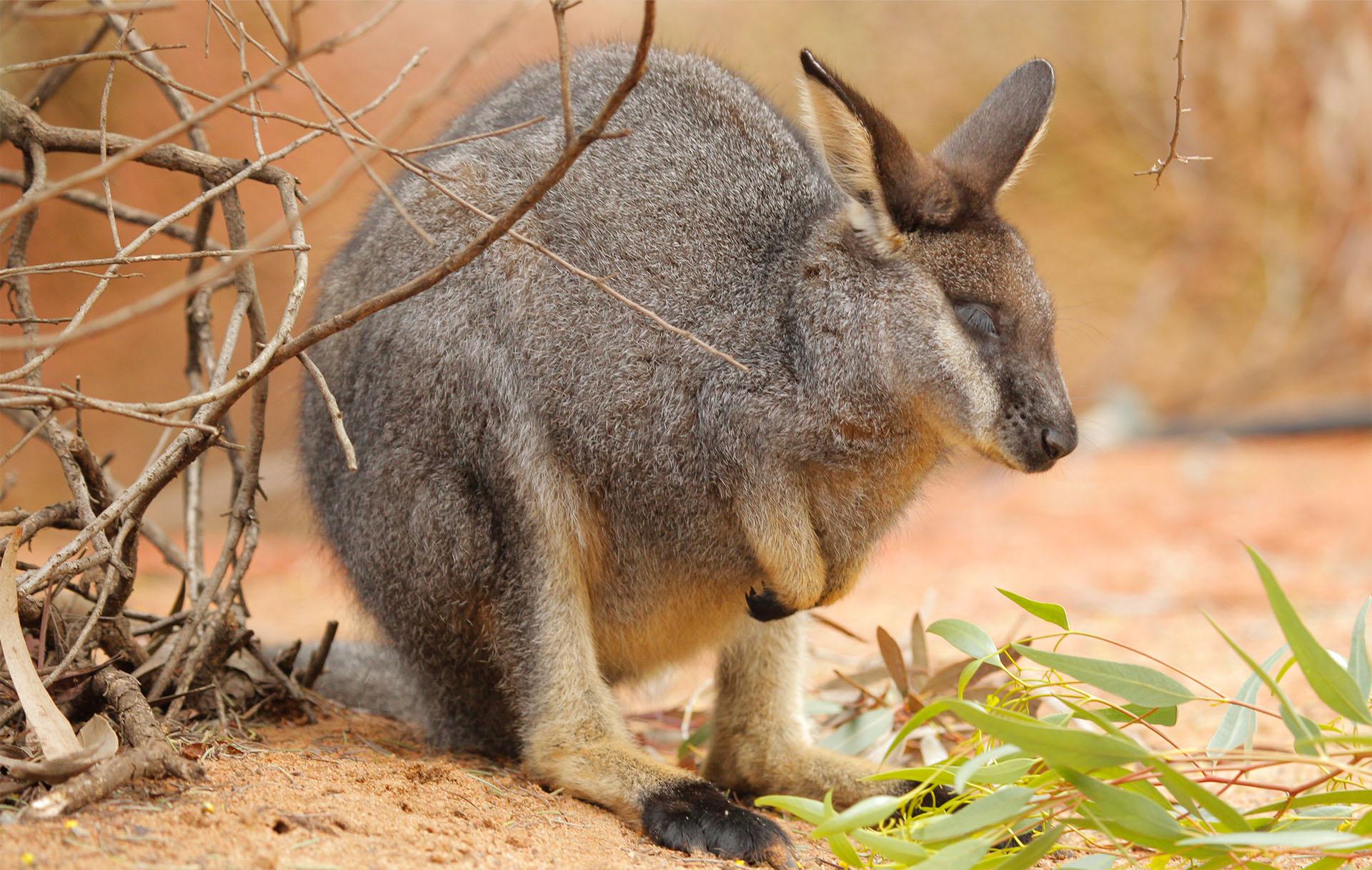 Image Credit: Perth Zoo