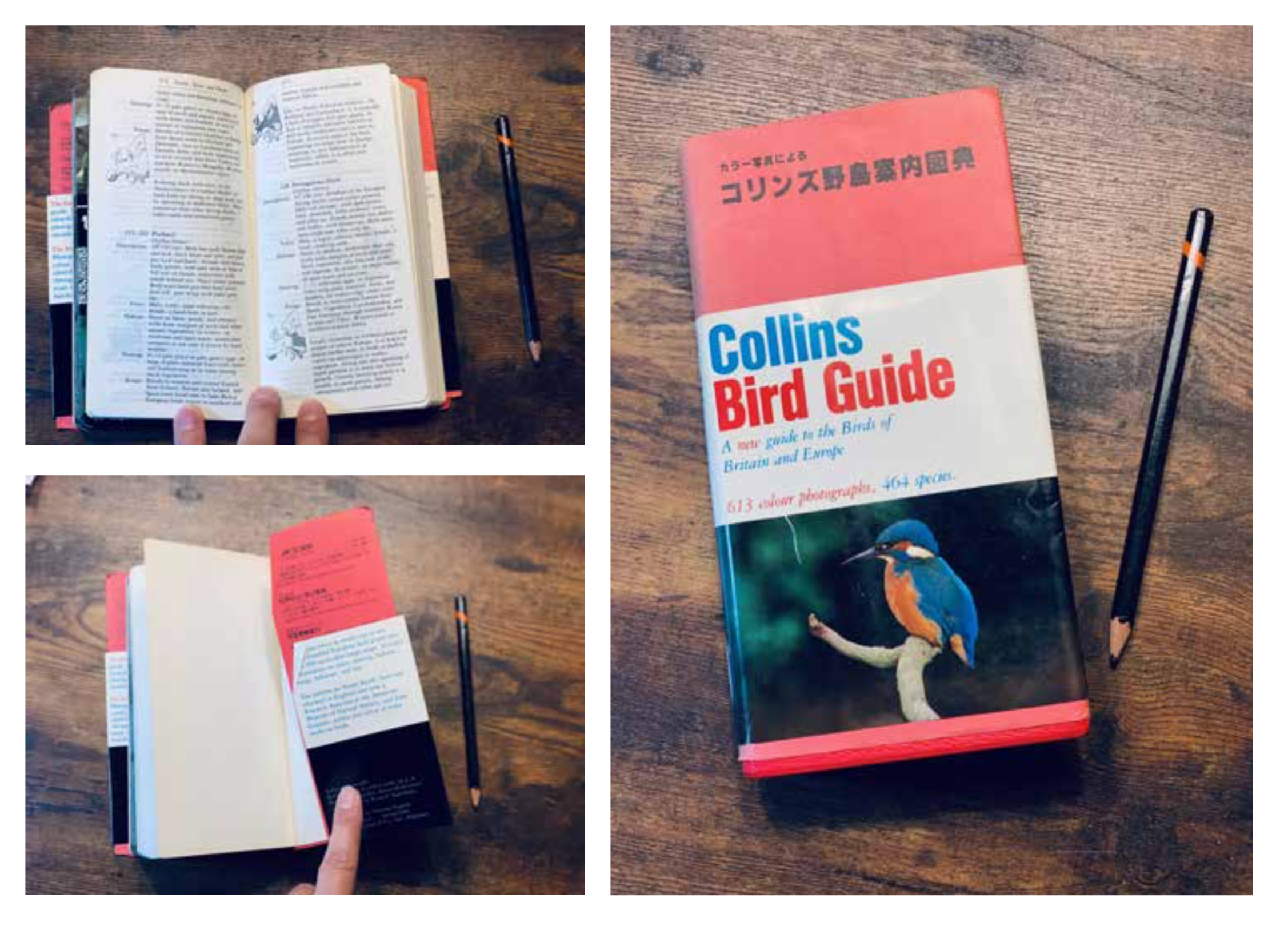 The  Collins Bird Guide  I found in an old bookshop was also a great inspiration for size, typography and binding.