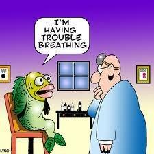 fishcartoon.jpg