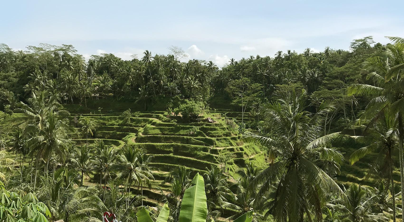 bali-rice-fields.jpg