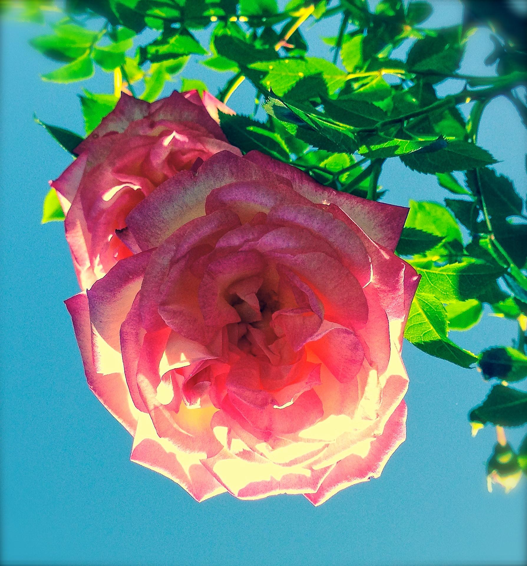 @ Flowers-LR&iP-..jpg