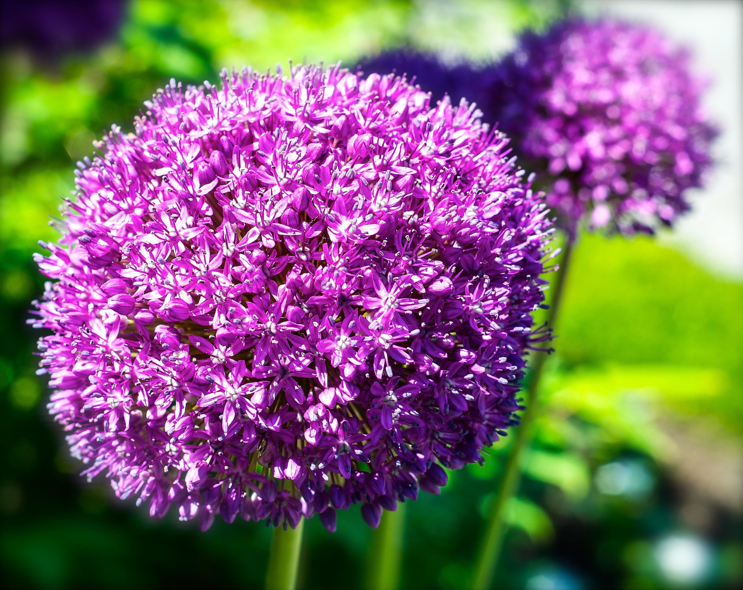 @ Flowers-LR.jpg.jpg