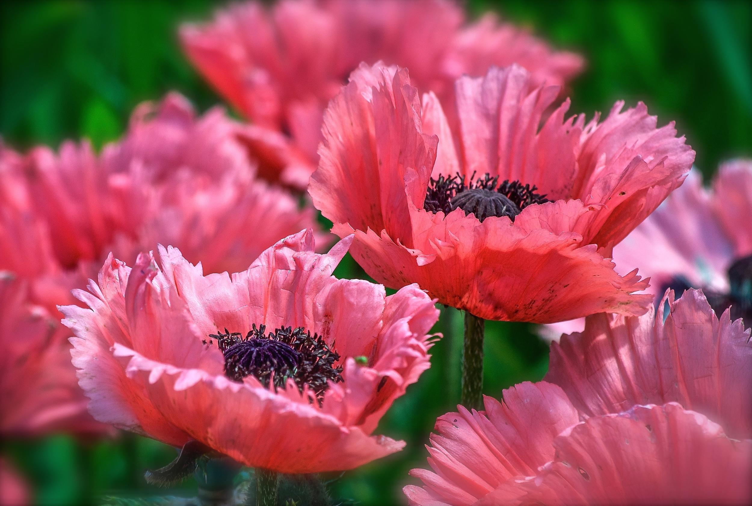 @ Flowers-LR&iP..jpg