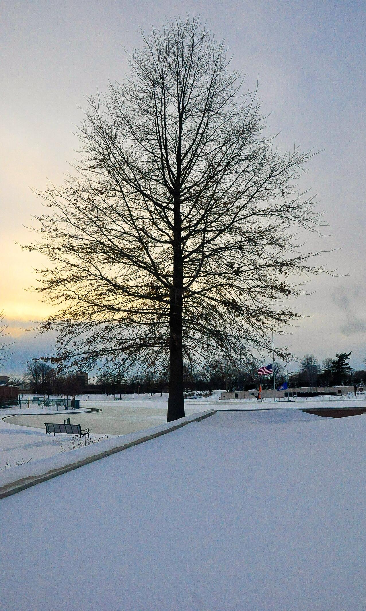 @ @ Snow_Eisenhower_Park _Tree © 2015 Joseph Kellard 2.jpg