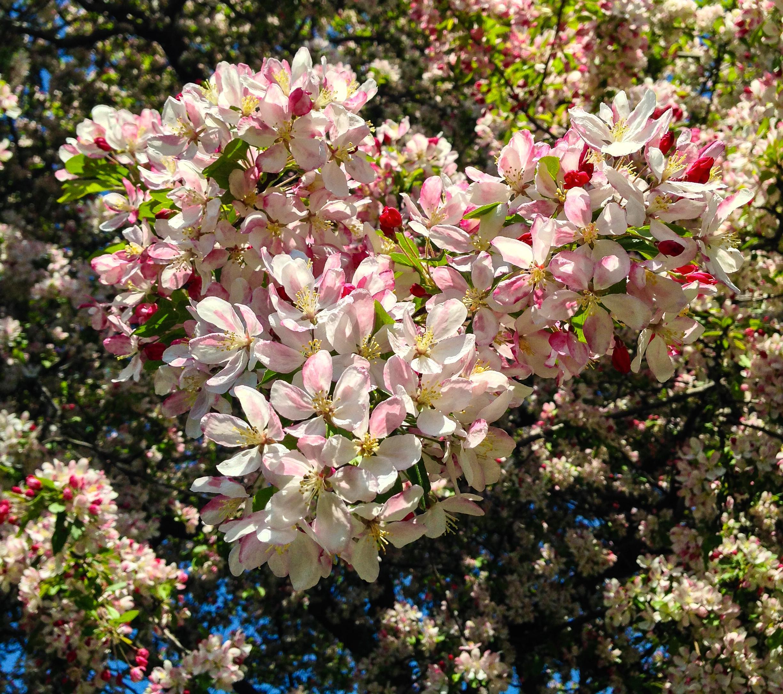 @ Central Park_Conservtory Garden_© 2015 Joseph Kellard:Kellardmedia.com.jpg