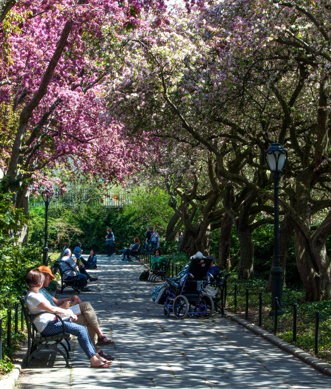 @ Central Park_Conservatory garden - © 2015 Joseph Kellard-Kellardmedia.com.jpg