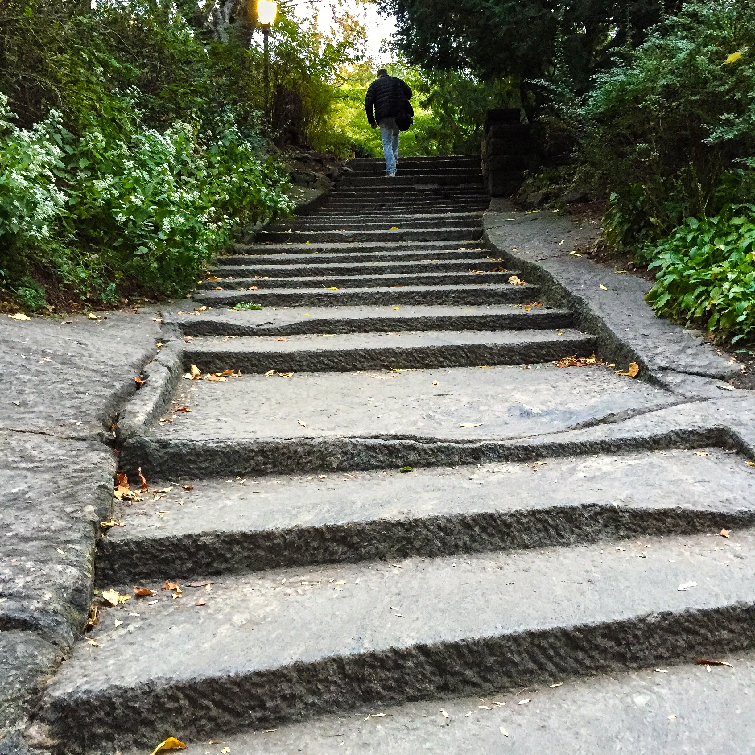 @ @ @ Stairs-Central Park copy.jpg