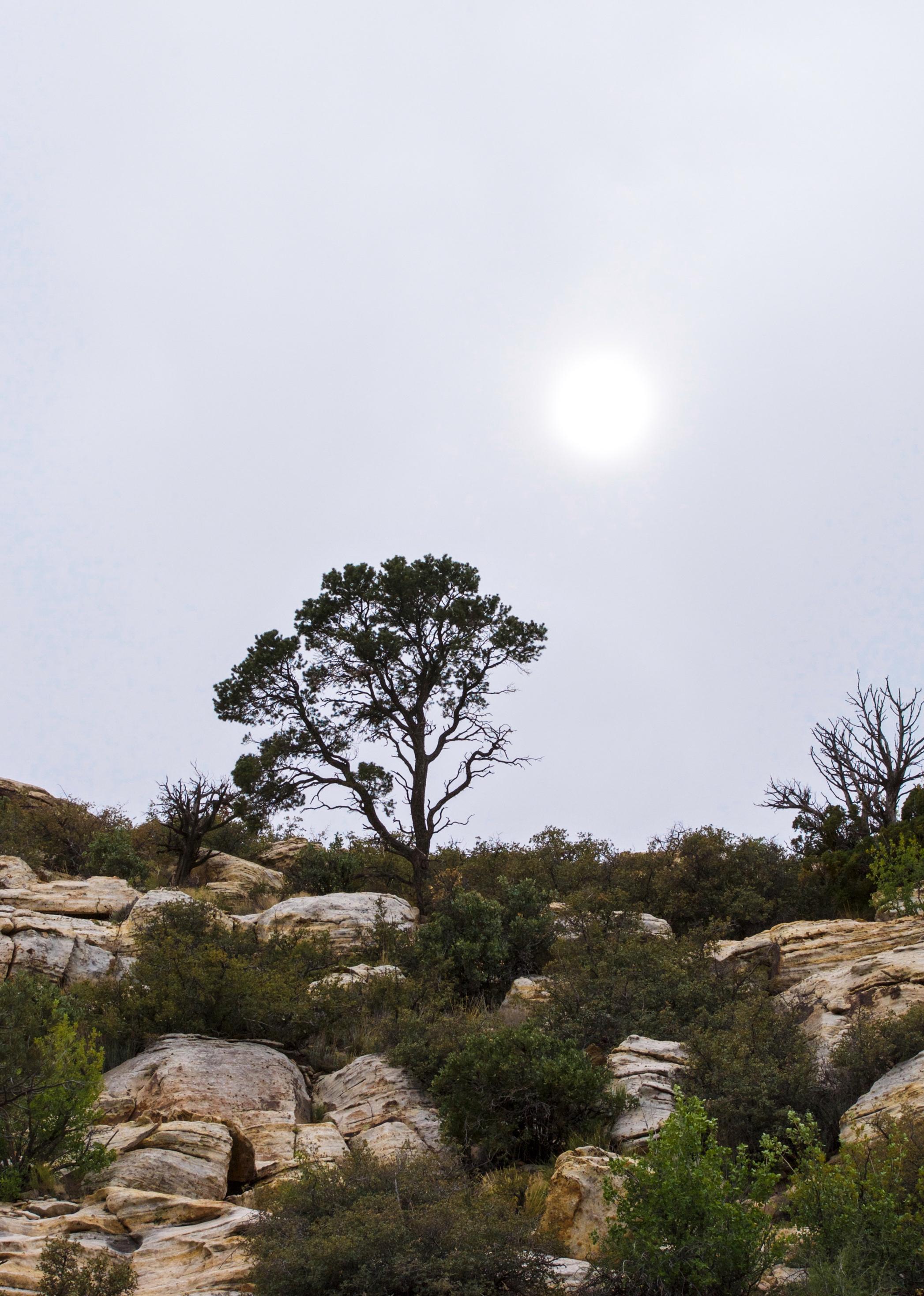 @ Red Rock Canyon_Tree_Sun_rock_4.15.18_Photo © 2018 Joseph Kellard:kellardmedia.com.jpg