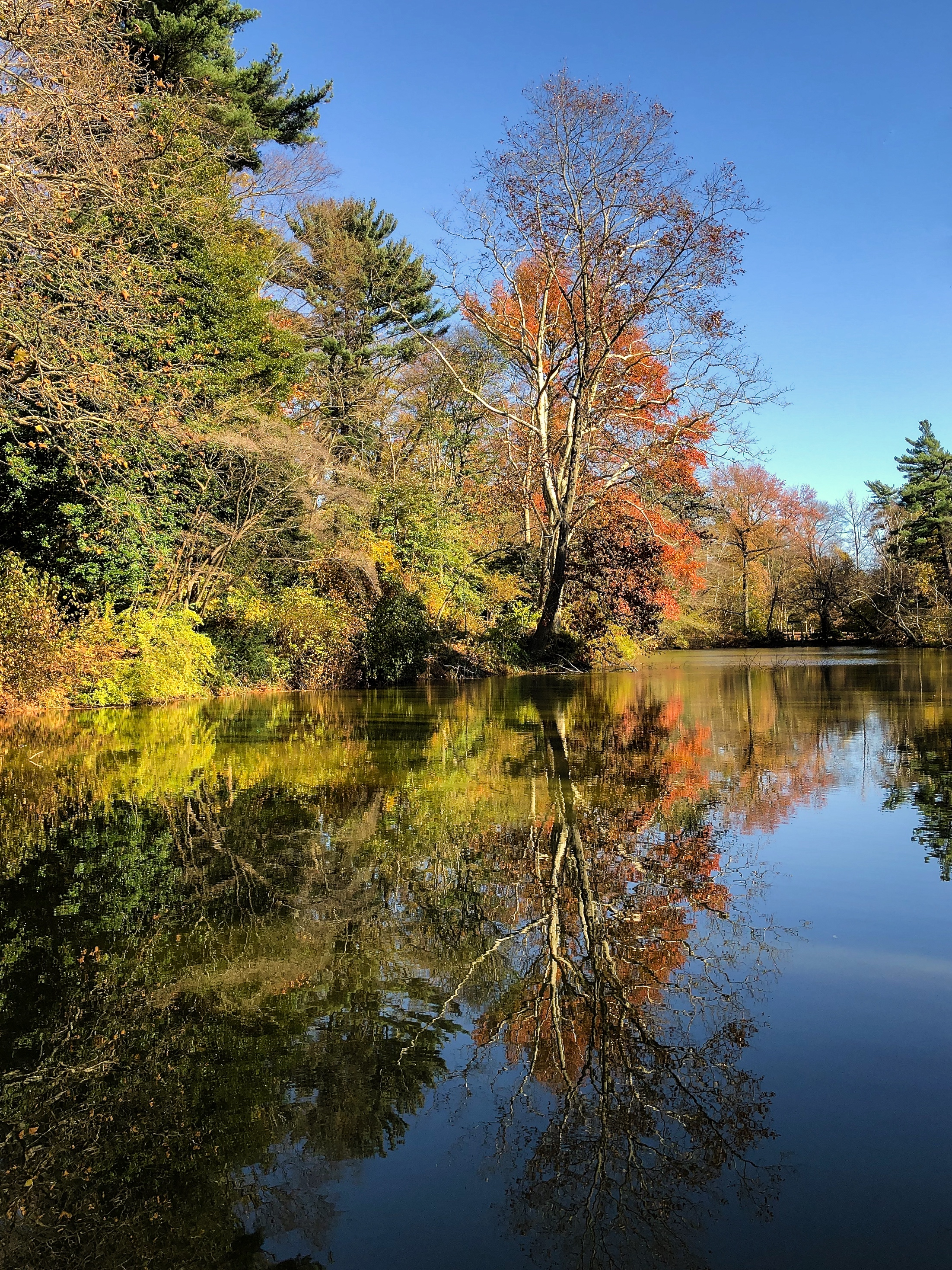 __@ East Lake_autumn trees_Old Westbury Gardens_11.11.18.jpg