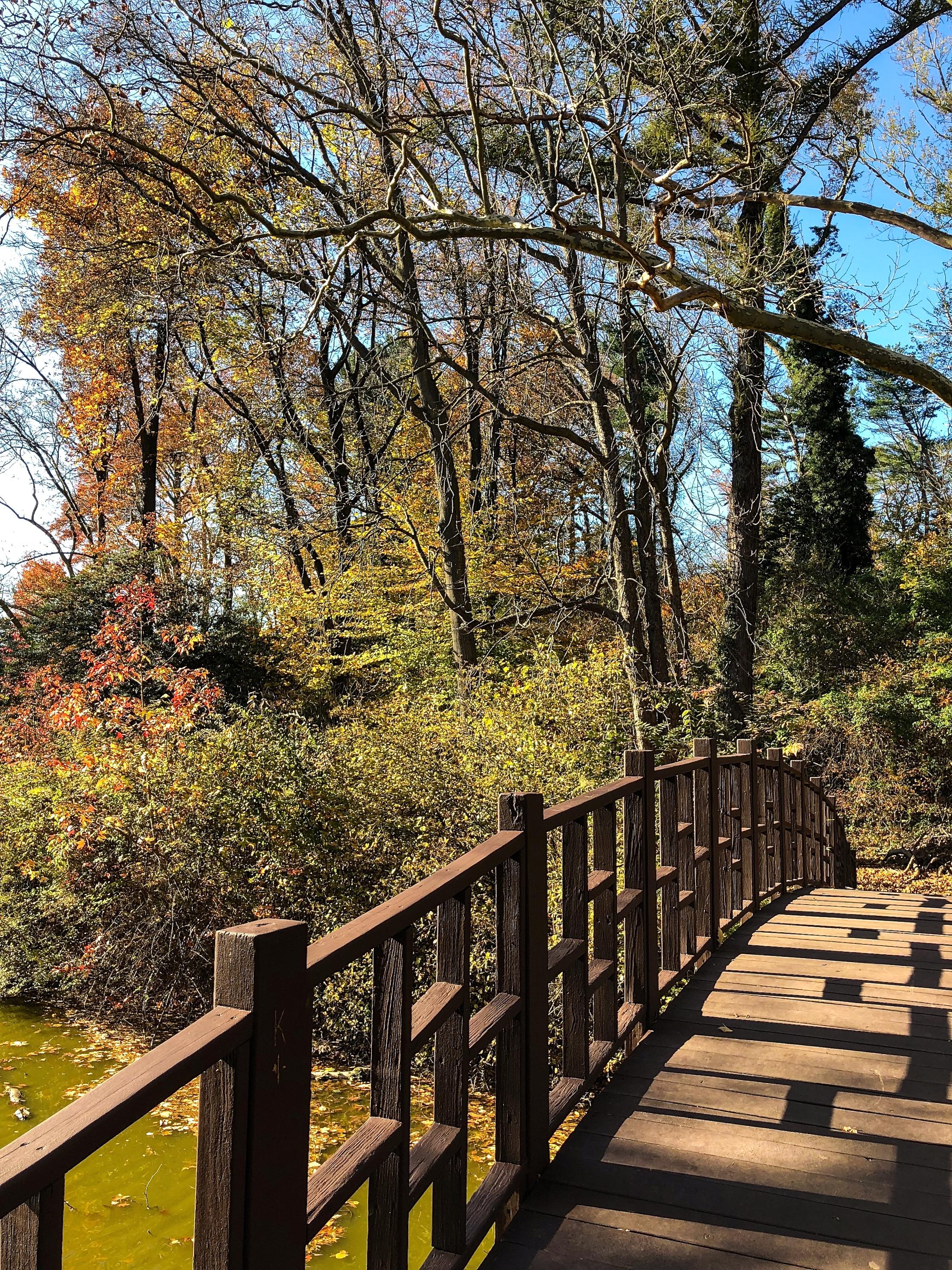 _@ Pedestrian bridge_Old Westbury Gardens_11.11.18.jpg