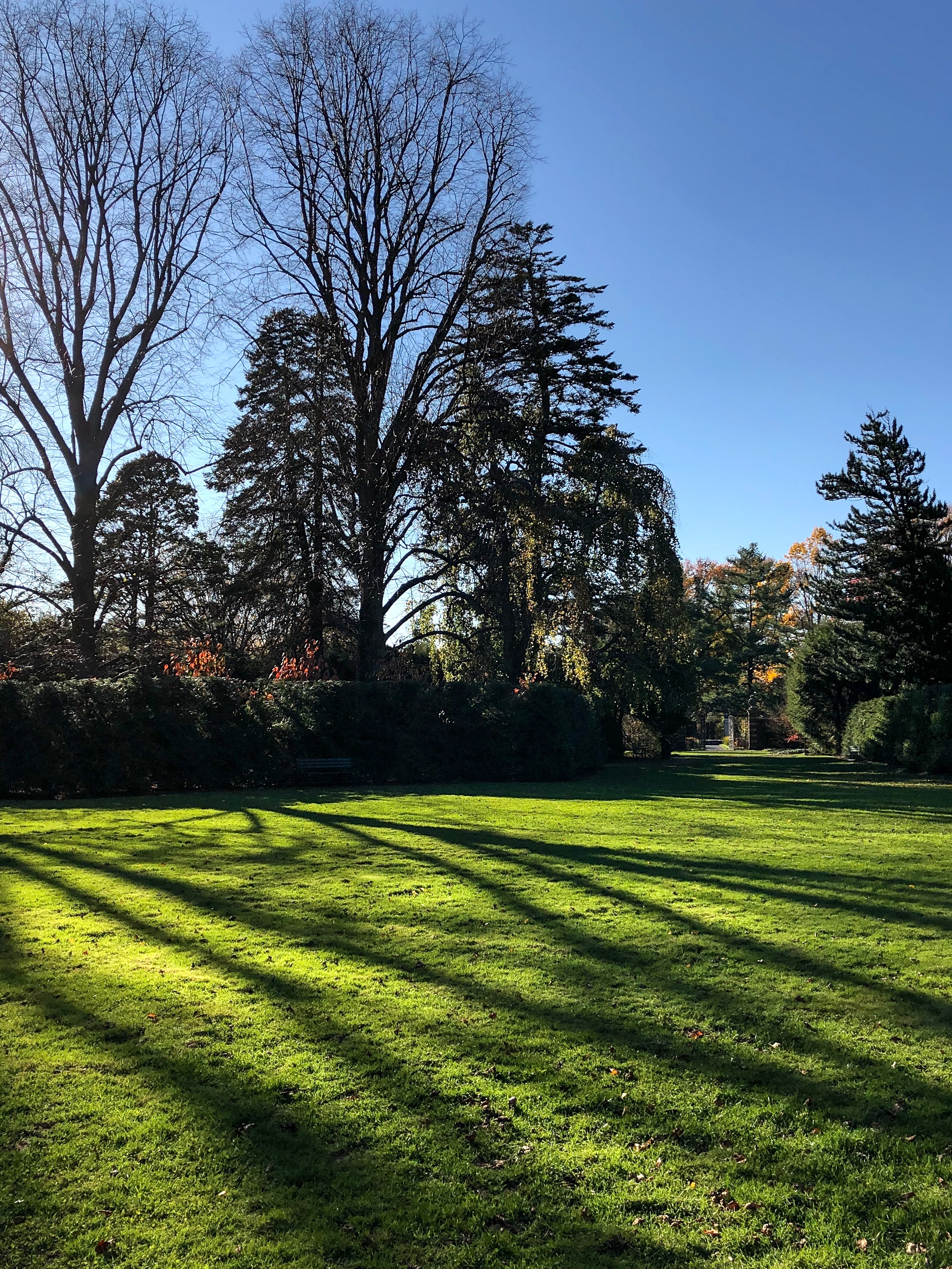 __@ Lawn backyard_Old Westbury Gardens_11.11.18.jpg