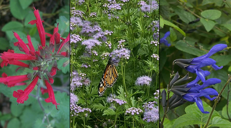Courtyard butterfly garden in Marfa TX