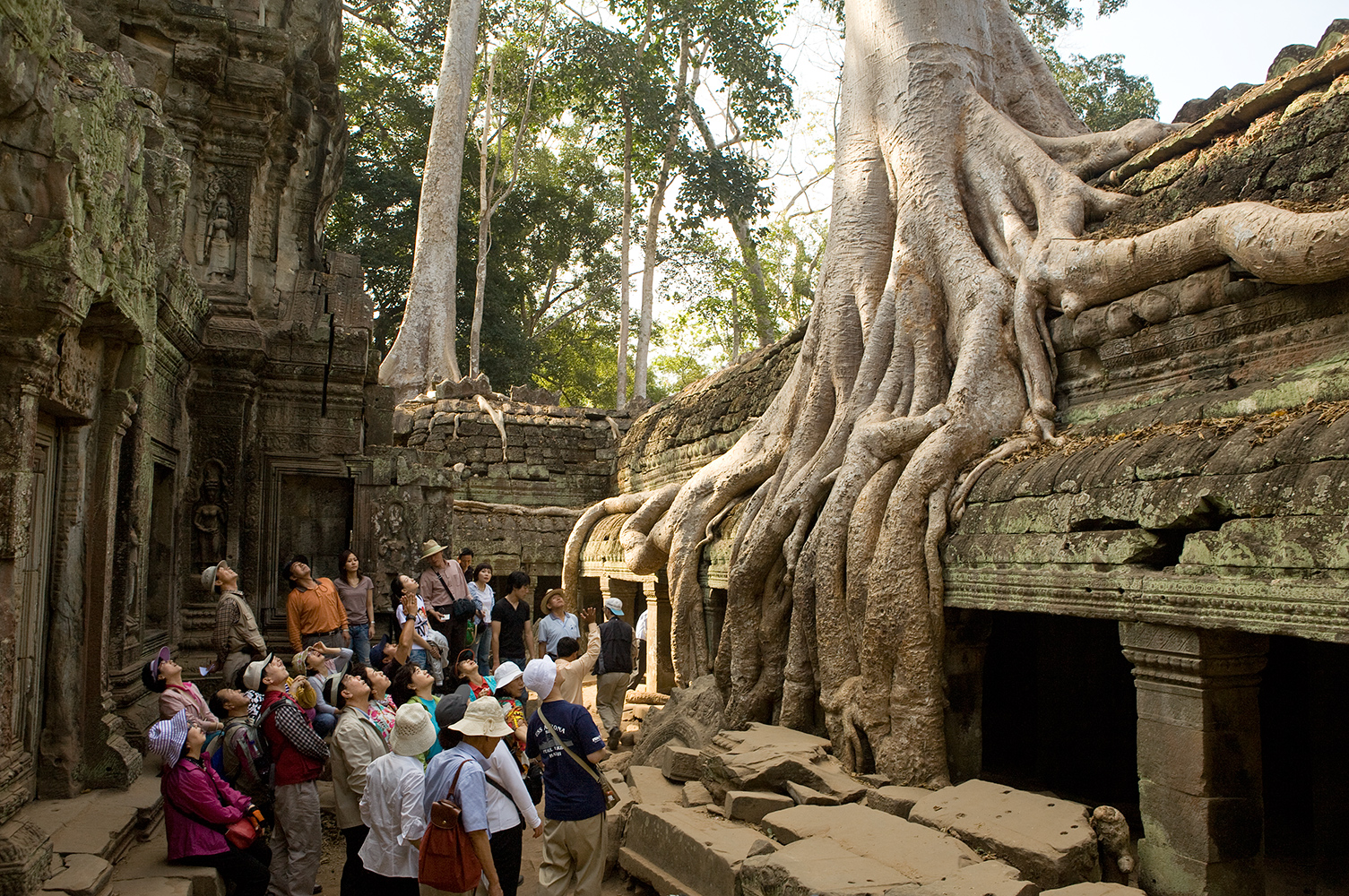 A tour group looks up as their guide describes a tree at Ta Prohm in Angkor, Cambodia.