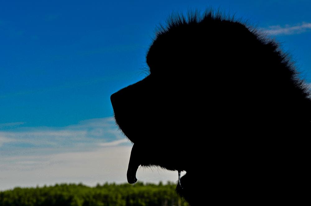 Skyla silhouette.jpg