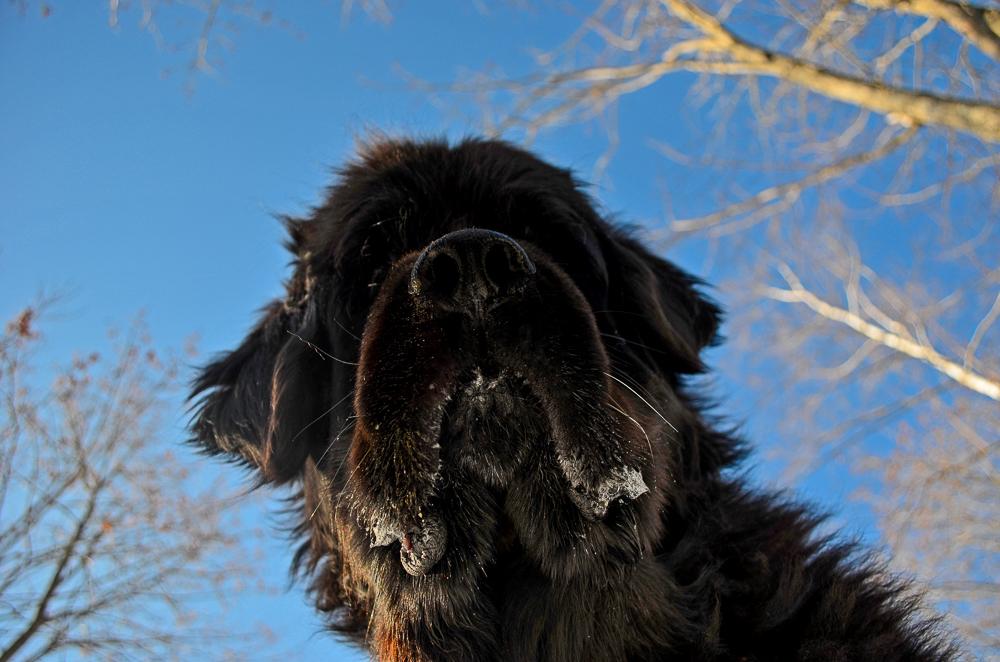 Skyla looking up.jpg