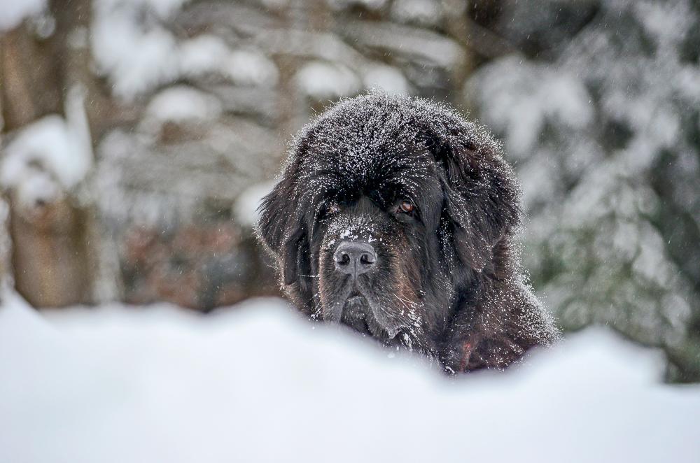 Skyla with snow.jpg