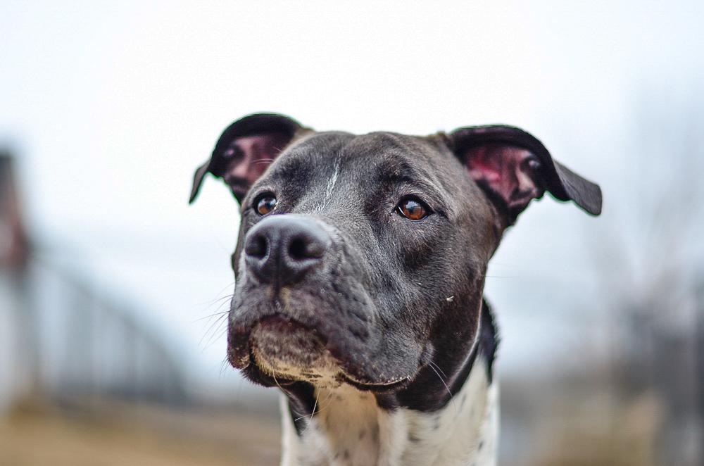 Pet adoption 5.jpg