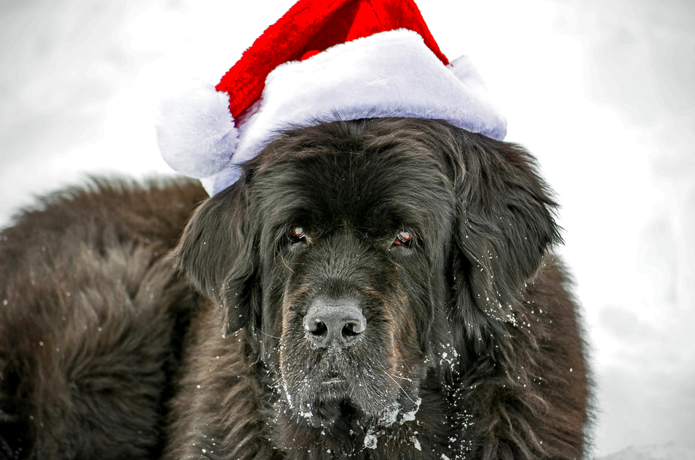 Skyla with Santa hat.jpg
