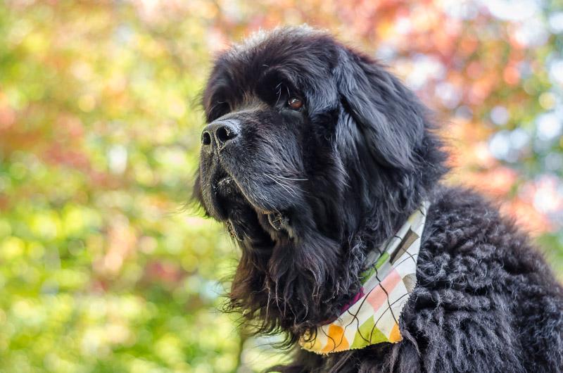 Skyla with scarf 2014-10-06 008.jpg