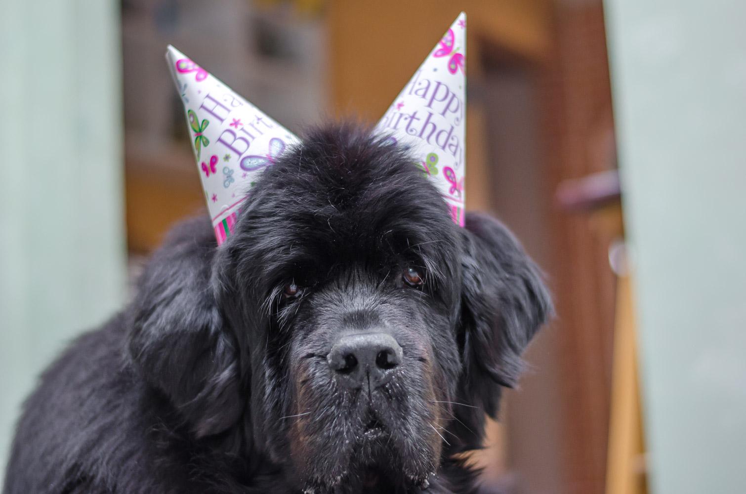 Skyla with birthday hat 2014-03-11 023.jpg