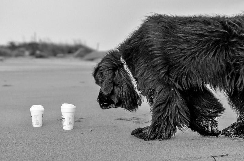 Skyla at Salisbury beach 2014-10-07 277.jpg