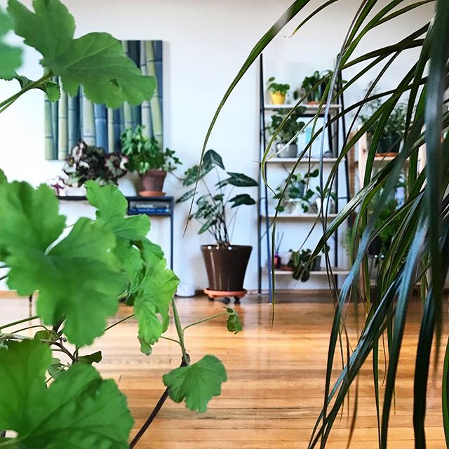Plants on plants on plants 🌱 #plants #jungalowstyle #dsplants #anotherdayattheoffice #planthoarder #plantmagic #houseplantplantclub #houseplantsofinstagram #plantscleantheair #urbangreening