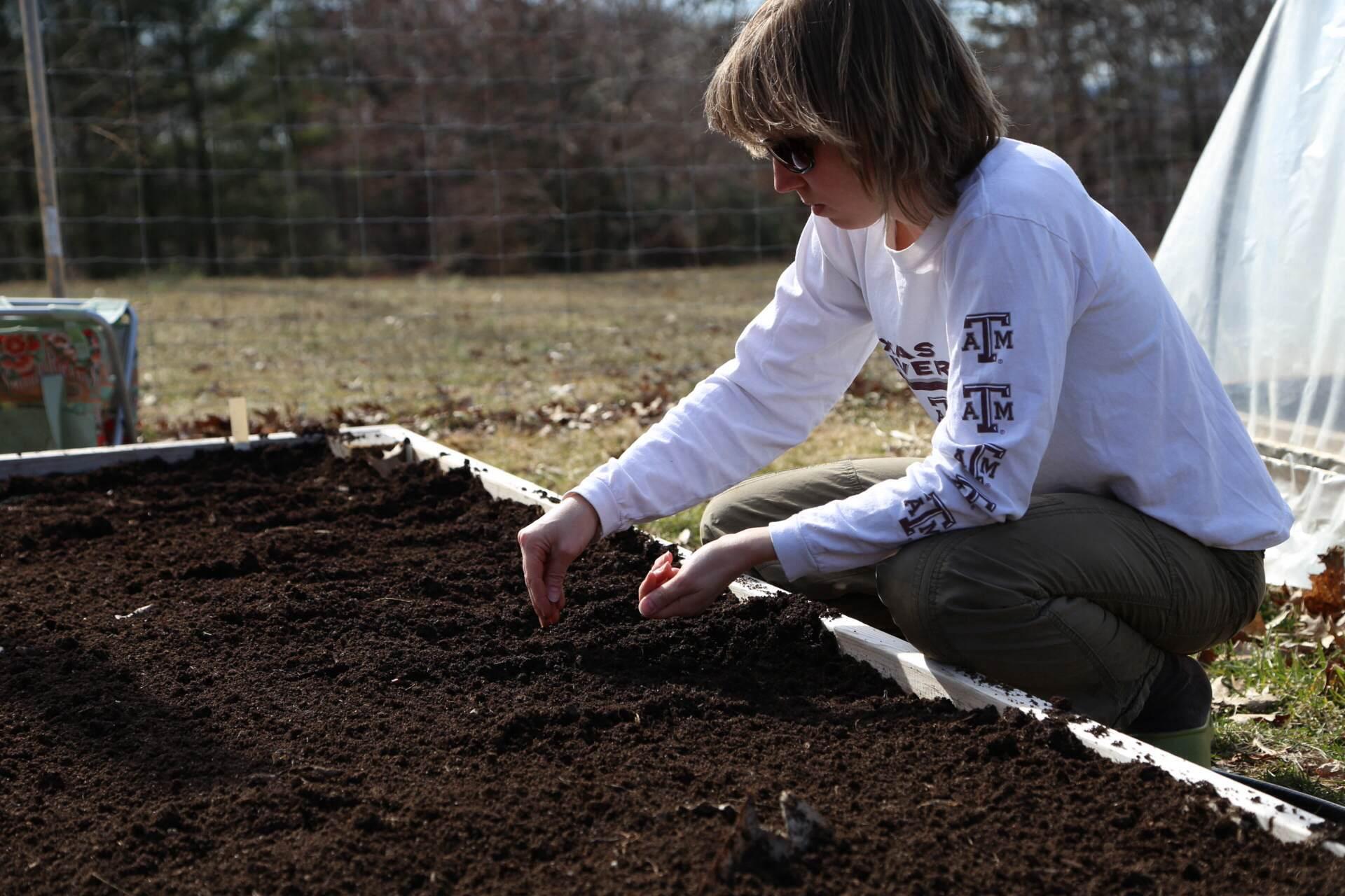 Seeding beets