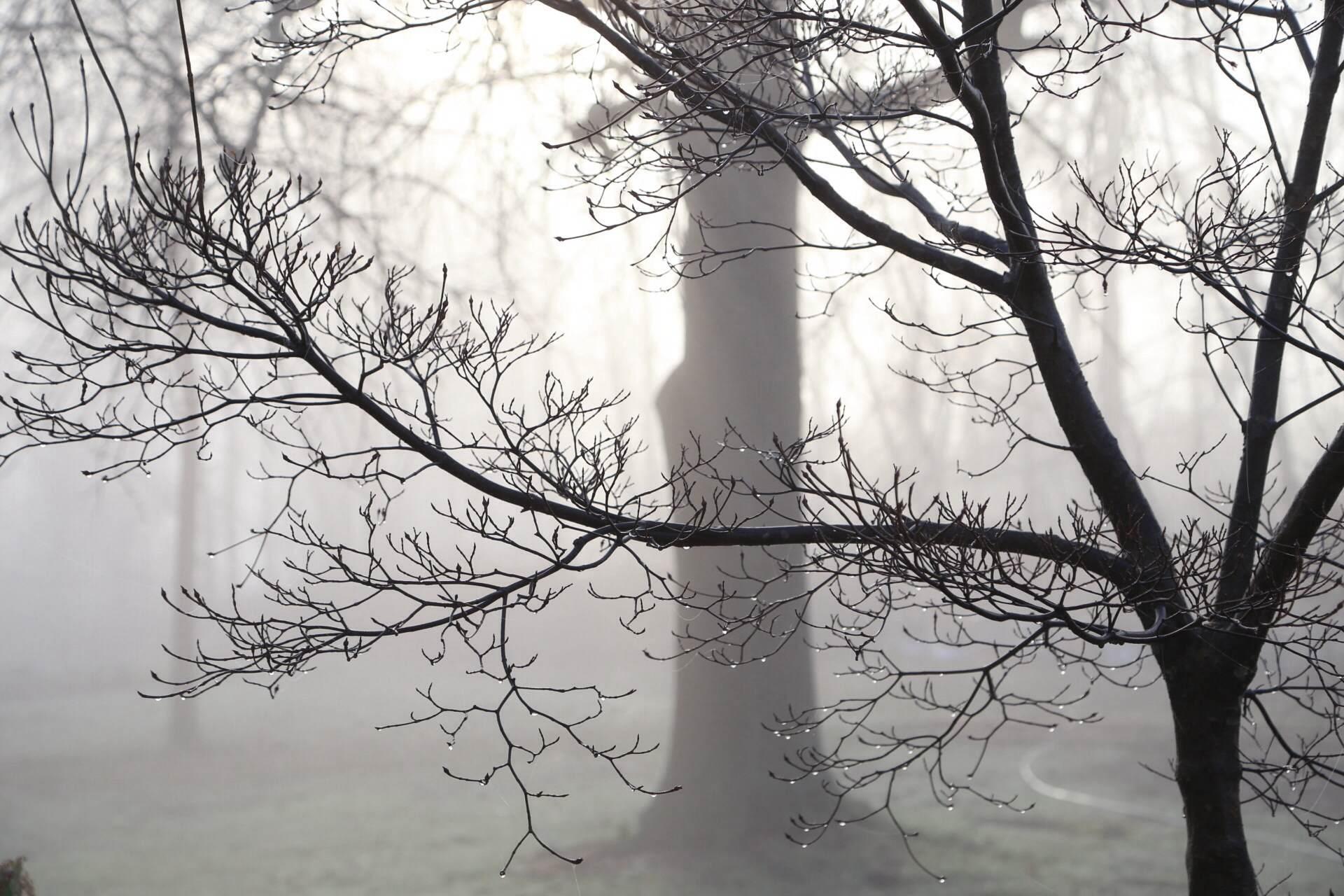 Morning fog ahead of a warm spring day