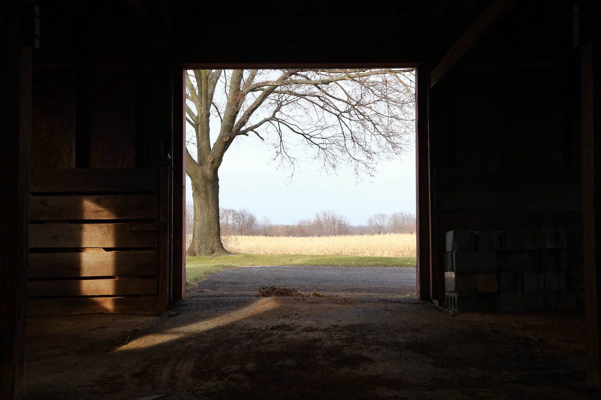 A view from the horse barn out into the future orchard.