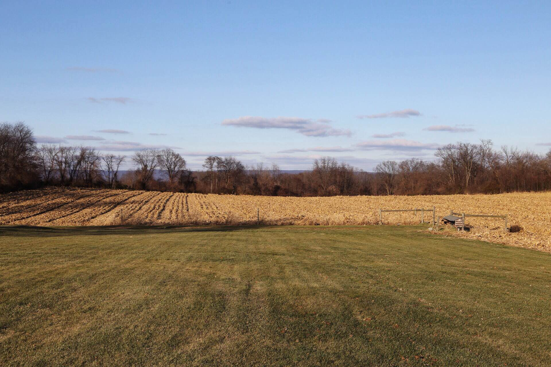 The future location of our u-pick orchard and nursery with the corn down. We found a local farmer to help with prepping and seeding the ground come spring.