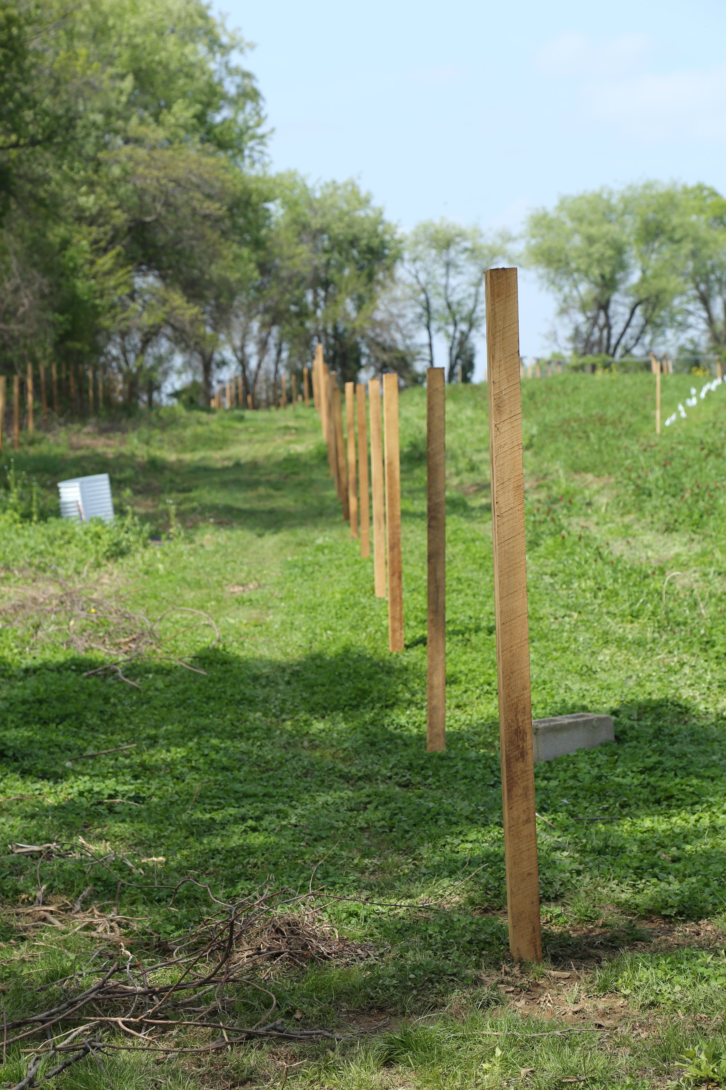 Posts pounded on our western fencerow