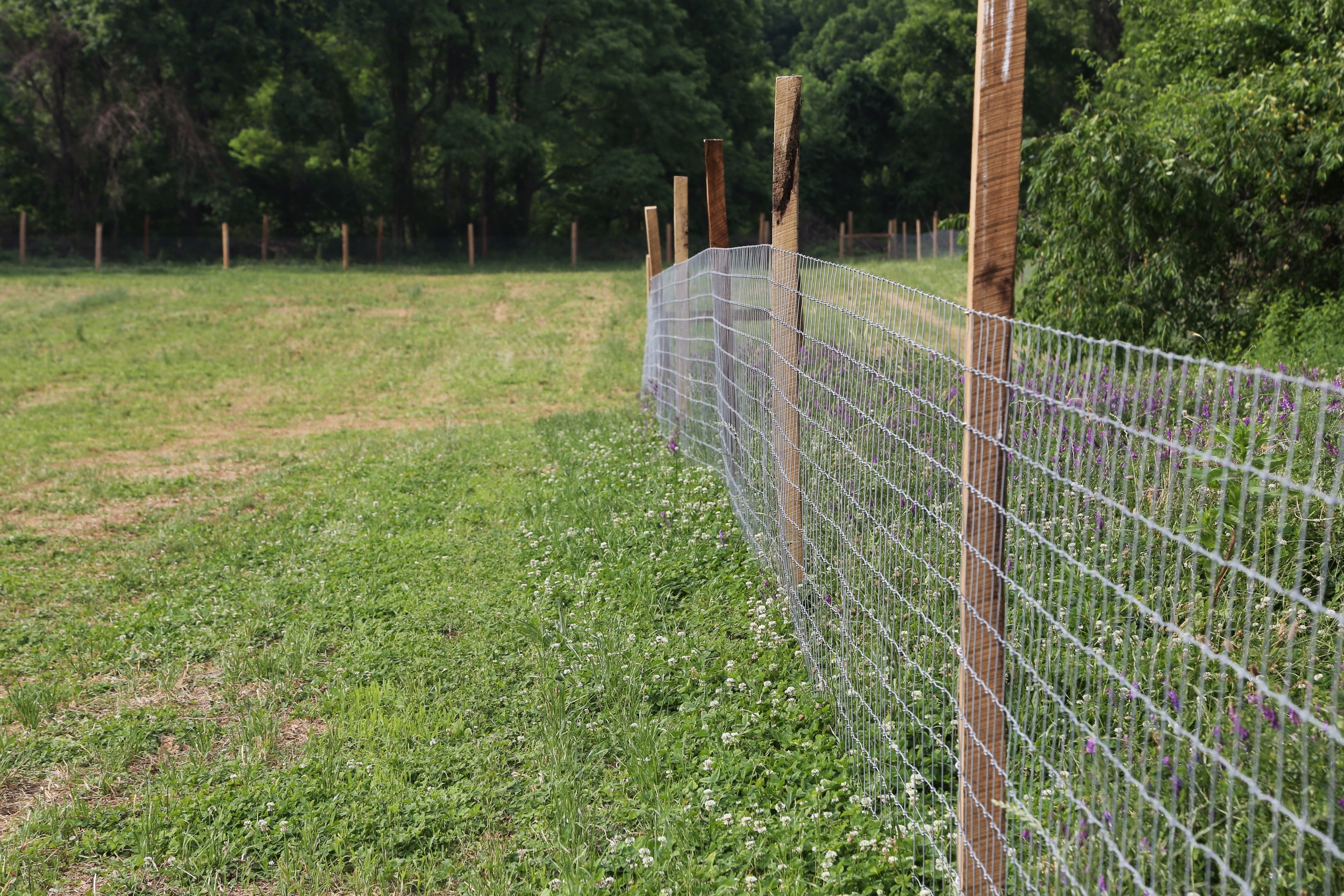 Looking down across a newly fenced area. Soon we'll let the goats loose here to clean it out.