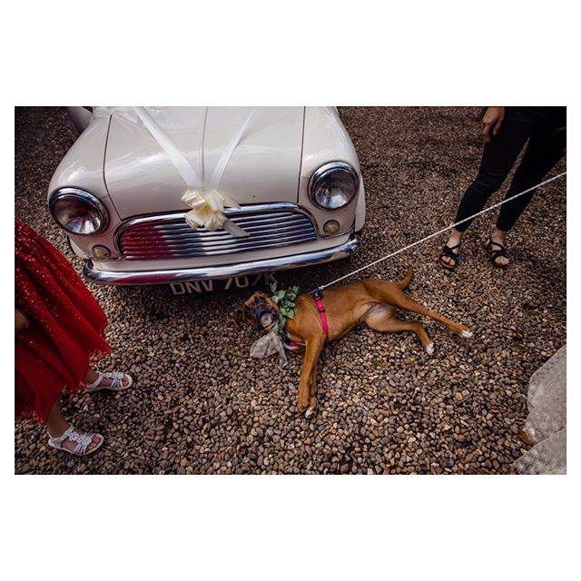 Lola🧡⠀⠀⠀⠀⠀⠀⠀⠀⠀ .⠀⠀⠀⠀⠀⠀⠀⠀⠀ .⠀⠀⠀⠀⠀⠀⠀⠀⠀ #justmarried#weddingplanningtime#londonwedding#cute#londonweddingphotographer#londonwedding#weddingreportage#documentartyphotography#bridetobe2020#2020bride#bridetobe2021#2021bride#weddingseason#outdoorwedding#weddingpet#weddingdog#summerwedding#dogofhonor#instawedding#instabride#dog#petsofinstagram#love#instadog#puppy#puppylove