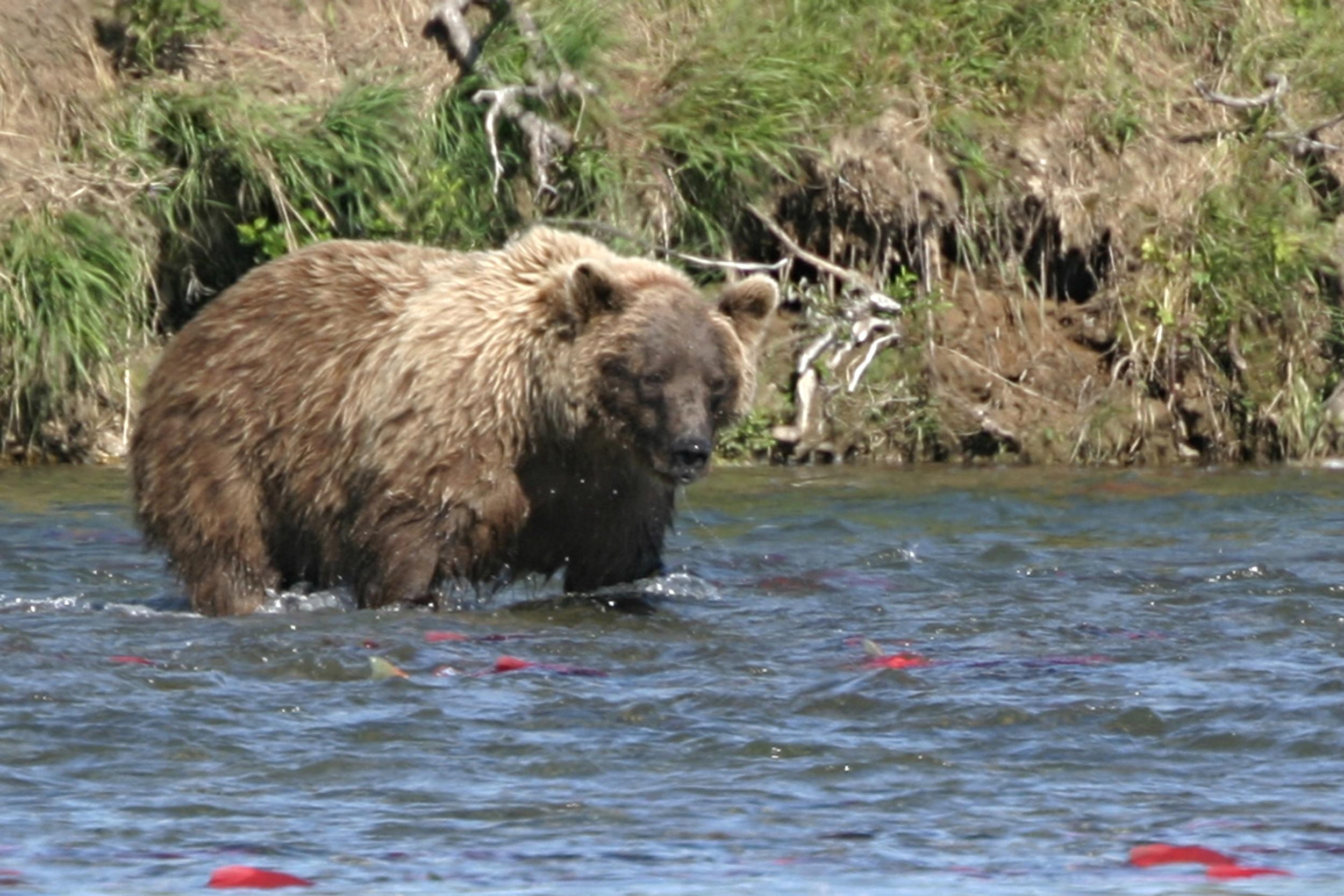 042-Bear 2005 I.jpg