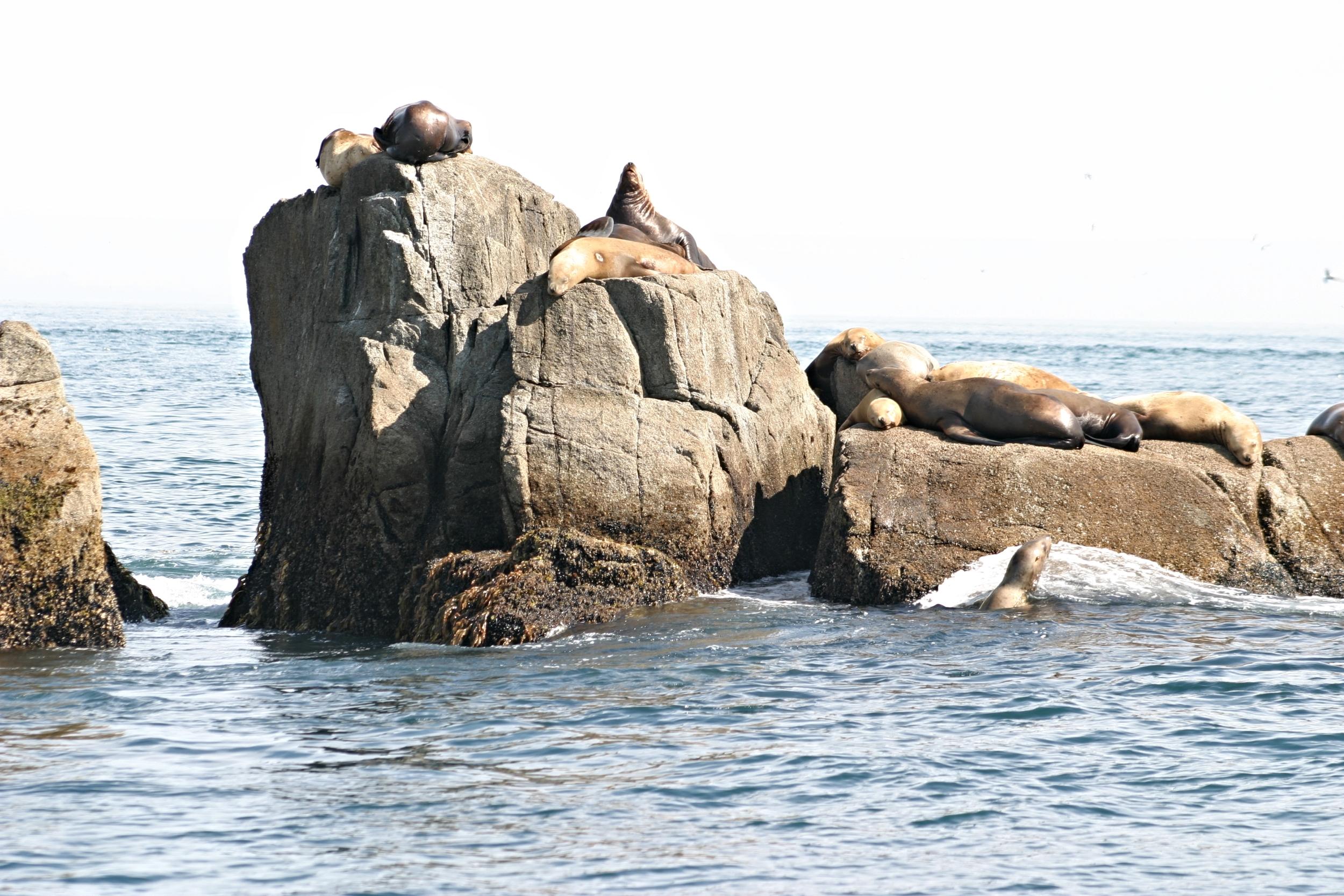 111-W13 Sea Lions 2003.jpg