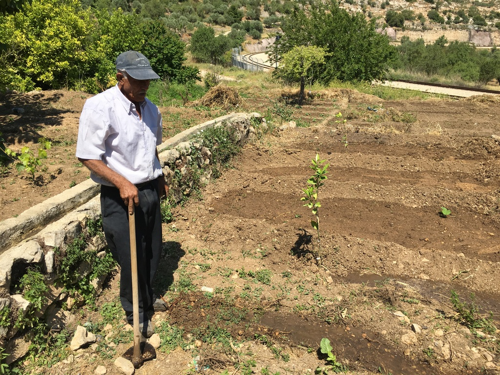 Planting new seeds in a field beneath the village of Battir, a World Heritage listed area. The field is being reclaimed for the Seed Library project by another hardy elderly farmer. Abu Elabed uses only 2 pieces of equipment - a hoe and a rake. The railway track at the bottom of the field is where the Jerusalem-Tel Aviv train runs.