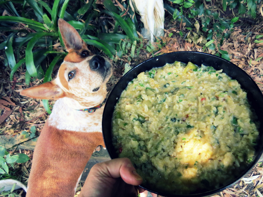You know a vegetarian dish is good when the dog can't stay away!
